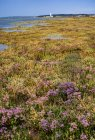 Wetlands during stormy sky — Stock Photo