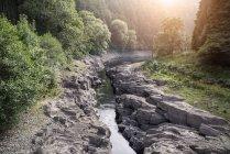 Солнечный свет сквозь деревья в ручей каньона — стоковое фото