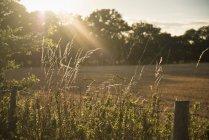 Сонце світить і підсвічування landcape сільській місцевості — стокове фото