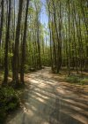 Path through beech tree forest — Stock Photo