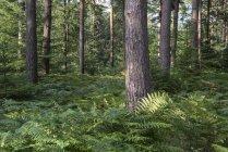 Paesaggio di foresta in estate — Foto stock
