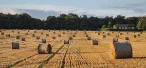 Hay bales in Summer field — Stock Photo