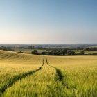 Paisagem do campo de trigo no pôr do sol de verão — Fotografia de Stock
