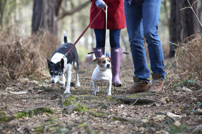 Couple walk two dogs — Stock Photo
