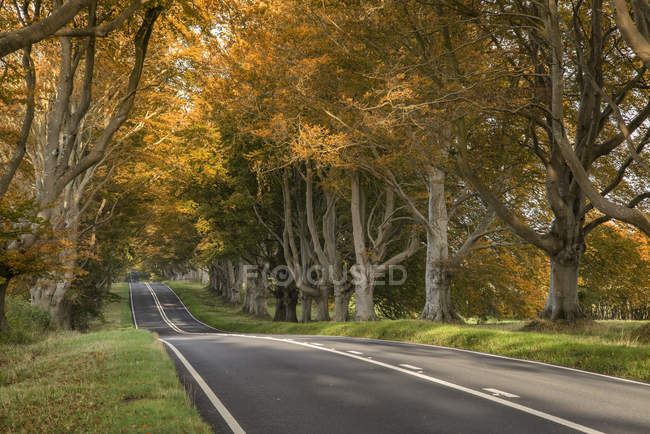 Landscape road in forest countryside — Stock Photo