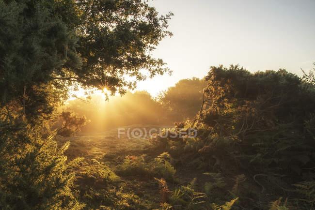 Sunrise краєвид в туманний Нью-Форест — стокове фото