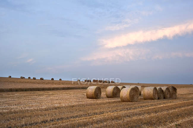 Landscape of hay bales in field — Stock Photo