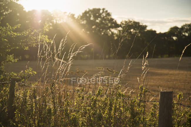 Sol brilhando e backlighting paisagem rural — Fotografia de Stock