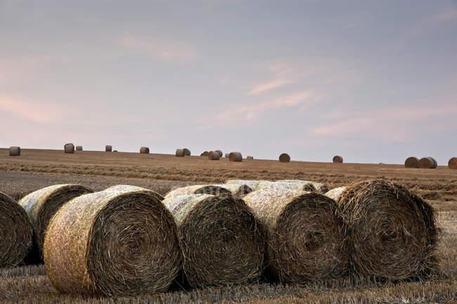 Paesaggio di balle di fieno in campo — Foto stock