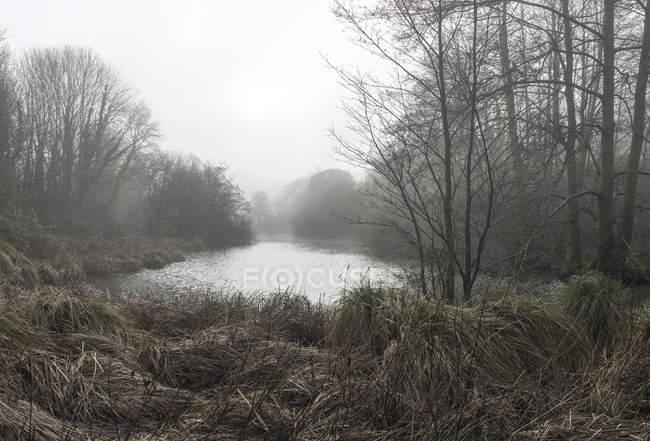 Драматичні moody туманні лісу — стокове фото