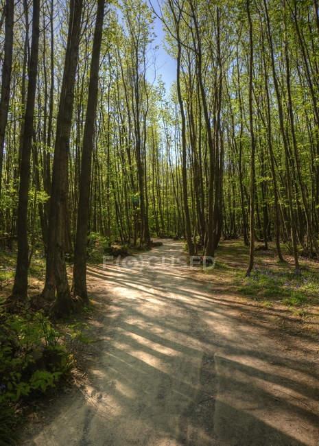 Path through beech tree forest — Stock Photo