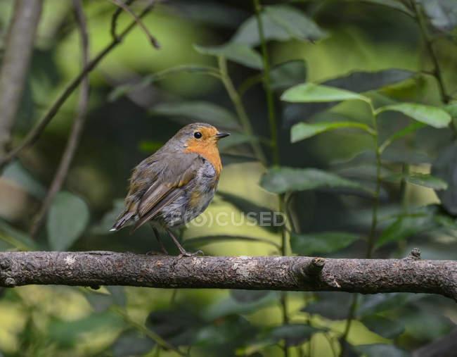 Uccello appollaiato in albero — Foto stock