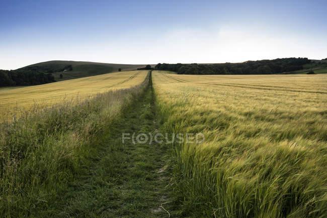 Золотой закат через поле — стоковое фото