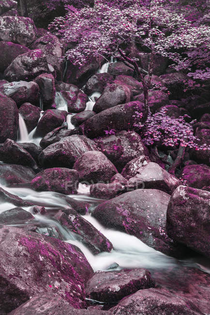 Цвет лесной ландшафт изображение — стоковое фото