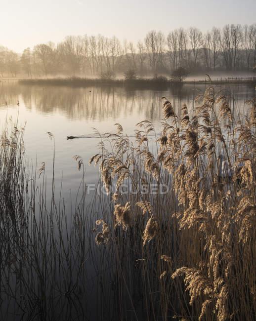 Спокійний ландшафт озеро в туман — стокове фото