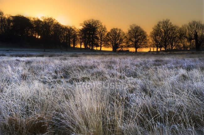 Frostigen Felder in Richtung Silhouetten der Bäume — Stockfoto