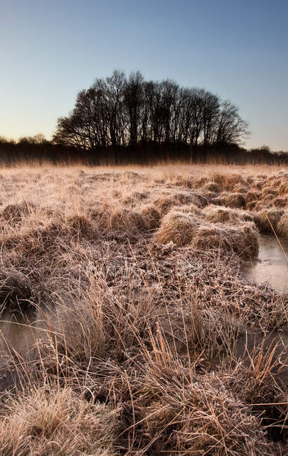 Frosty grass and bog frozen over with trees — Stock Photo