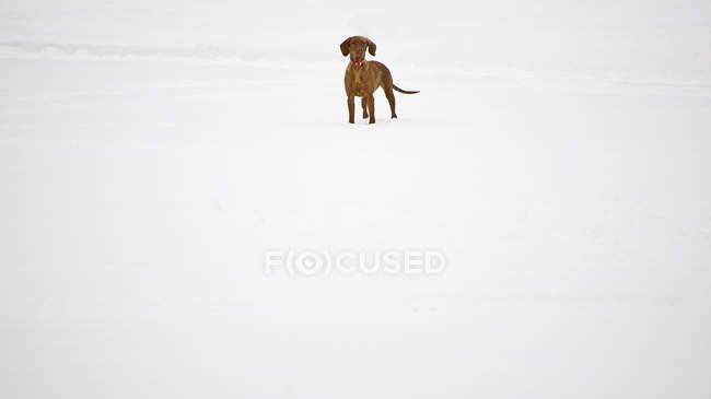 Paisagem rural com cão na neve — Fotografia de Stock