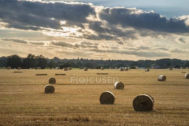 Balles de foin dans le champ de l'été — Photo de stock