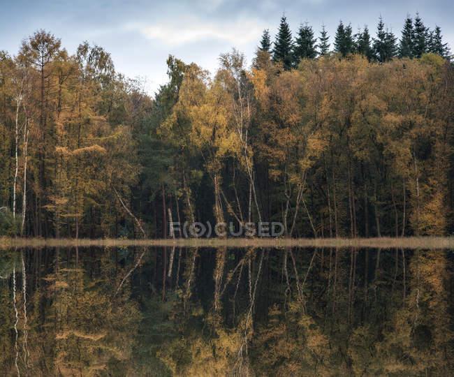 Woodland відбивається в ще озеро води — стокове фото