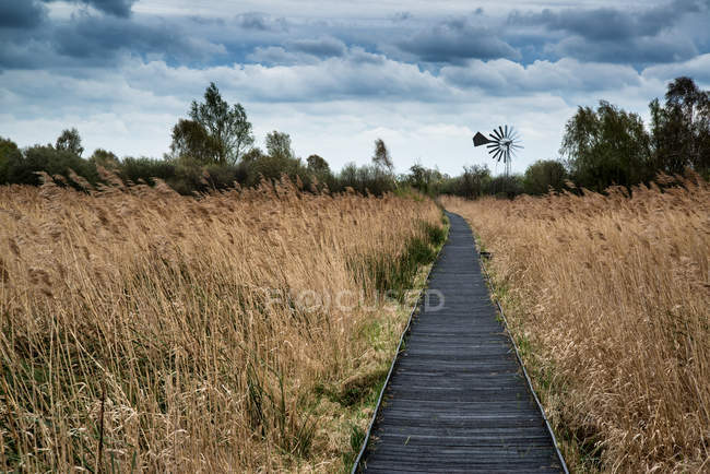 Stormy sky over wetlands with boardwalk path — Stock Photo