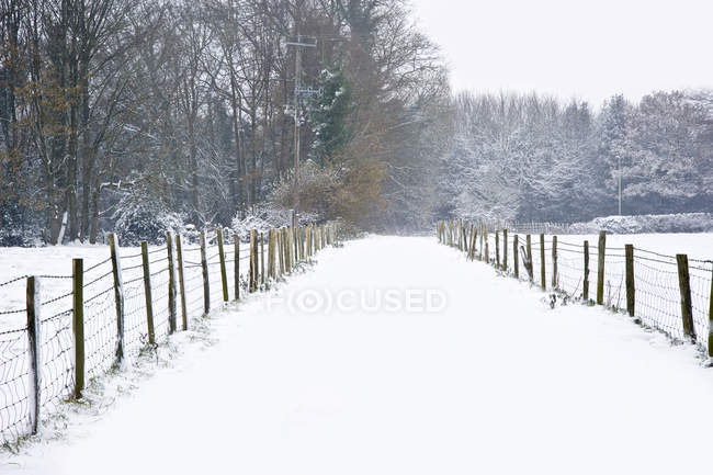 Beautiful winter forest snow scene — Stock Photo