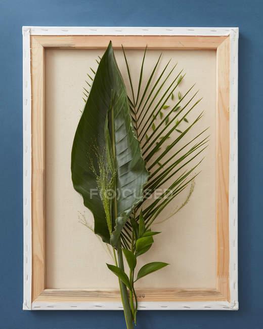 Composizione di foglie verdi in cornice — Foto stock