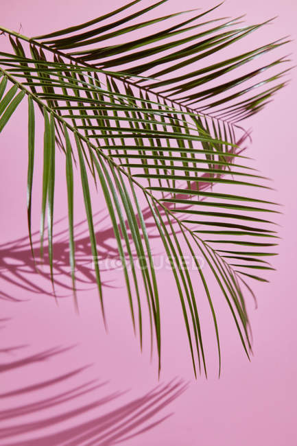 Palm leaves composition — Stock Photo