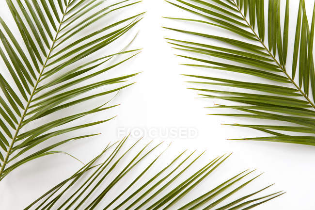 Palm leaves, Flat lay — Stock Photo