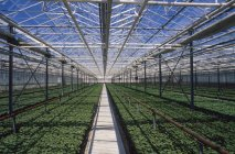 Rows of cultivated plants — Stock Photo