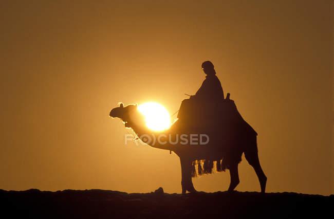 Egipto, camello al atardecer - foto de stock