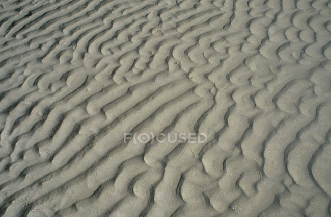 Rippled desert sand — Stock Photo