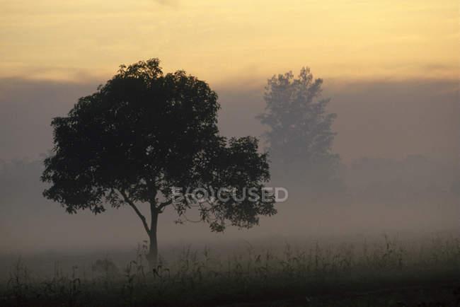 Tree and ground fog — Stock Photo