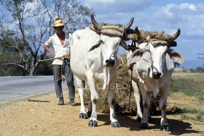 Cuba, contadino con carro trainato dai buoi — Foto stock