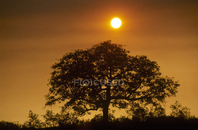 Tree Silhouetted against colorful sky — Stock Photo