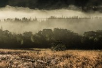 Saftig grüne Hänge im Nebel — Stockfoto