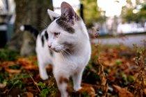 Small kitten on grass — Stock Photo