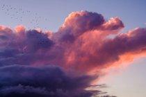Birds flying through thunder cloud — Stock Photo