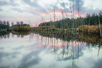 Tronchi d'albero morti nel lago — Foto stock
