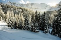 Snow-capped fir trees in Ehrwald — Stock Photo