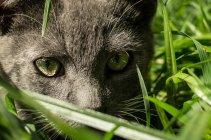 Смішні кошеня в саду трави — стокове фото