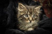 Крихітні кошеня в тканини — стокове фото