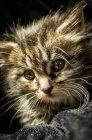 Pequeño gatito en tela - foto de stock