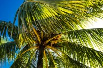 Palmeira em Livingston — Fotografia de Stock