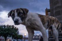 Cane sulla strada di notte — Foto stock