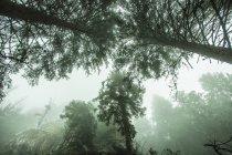Misty mountain forest — Stock Photo