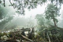 Dead tree trunks on misty hill — Stock Photo