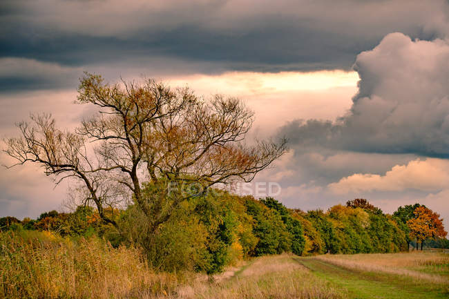 Autumn colored trees with dark clouds — Stock Photo