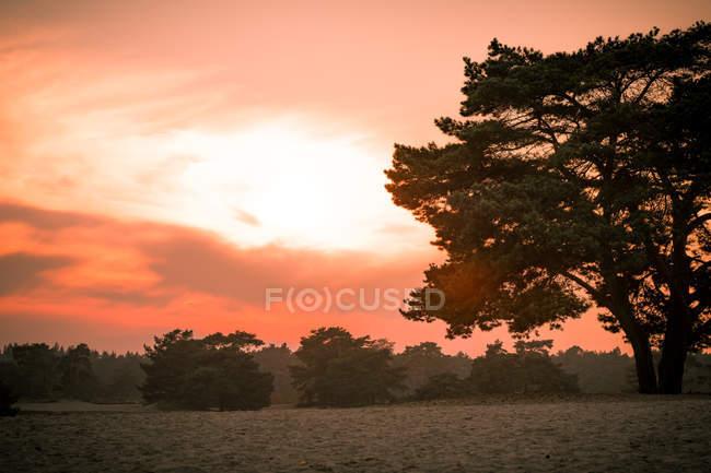 Coucher de soleil sur les dunes de sable en forêt — Photo de stock