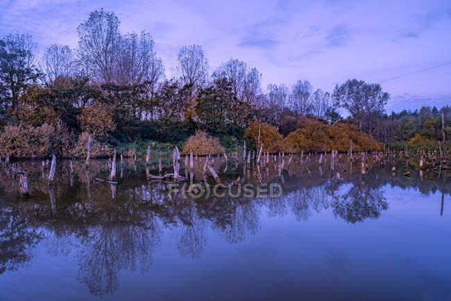 Мертве дерево стовбури в озеро — стокове фото